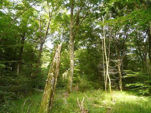 Forêt domaniale de Chizé