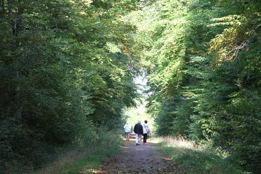 Des promeneurs en forêt domaniale de Haye