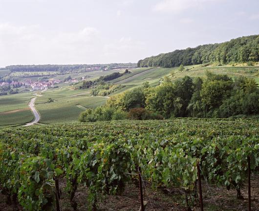 Vue de la Montagne de Reims