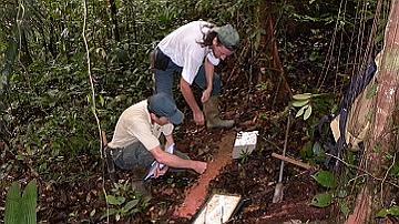 prélèvement d'échantillon de terre