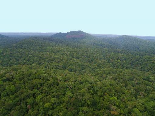 Forêt vue d'hélicoptère