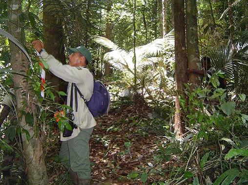 Un agent ONF en forêt