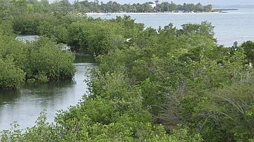 Marais de Port-Louis : site aménagé, pouvant accueillir le public pour une découverte des richesses du milieu naturel de la mangrove