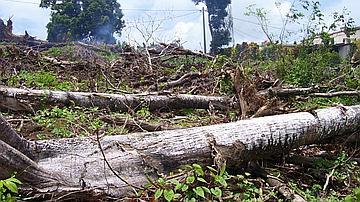 Défrichement direct par arrachage des arbres