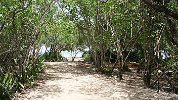 Arrivée à l'Anse Meunier (Forêt domaniale littorale de l'Anse Meunier)