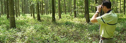 La visite commence par une présentation générale de la forêt