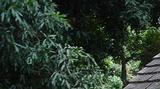 Bienvenue dans la forêt de La Providence