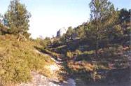 Guarrigue coté sud chemin saint jacques