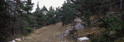 En cheminant entre les sapins, pins à crochets, hêtres, on peut apercevoir des chamois