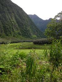 Le sentier suit les berges de l'étang