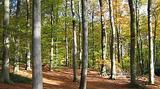 Avec 13.000 ha, la forêt de Retz est le premier massif domanial de l'Aisne