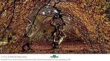 Insolite, la forêt de Verzy (Marne)