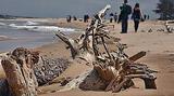 Derrière cette image de carte postale, une bataille silencieuse est menée par les forestiers : la guerre du sable (plage de la forêt de Trousse Chemise)