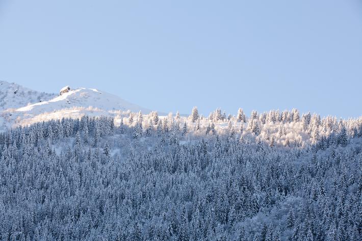 Les forêts communales de Pinsot et de La Ferrière, avec des forêts privées la vallée du Haut Bréda, sont nichées entre Grenoble et la Savoie. Pierre Pola, technicien forestier territorial, gère ces forêts. Il est également correspondant EPA : Enquête permanente avalanches.