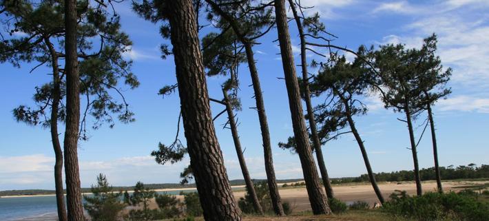 Préparer la troisième génération de forêt