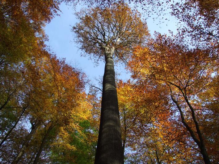 Bercé, une forêt d'exception