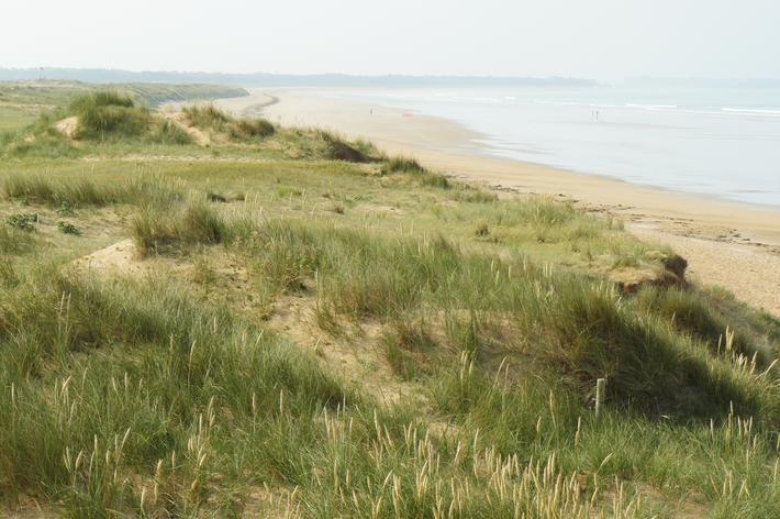 Les dunes : une succession de milieux à préserver
