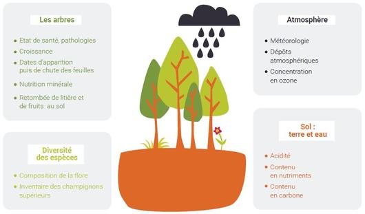 The components of forest ecosystems observed in RENECOFOR network