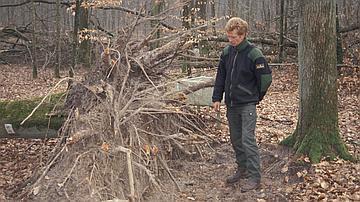La placette au lendemain de la tempête de 1999