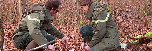Les sols forestiers : capital santé des forêts