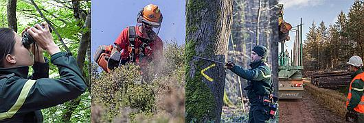 Quatre saisons en forêt avec l'ONF