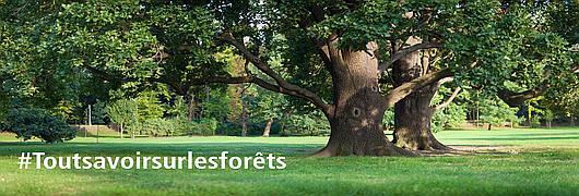 #Toutsavoirsurlesforêts : Comment expliquer la diversité des essences d'arbres ?