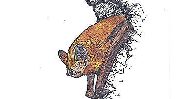 A la recherche de discrétion et d'obscurité, la pipistrelle sait utiliser les cavités dans les arbres
