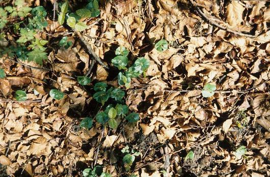 On trouve dans la litière les petits boudins de terre que le lombric régurgite