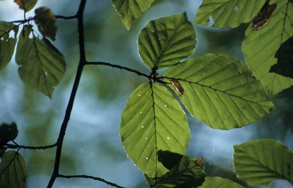 Onf h tre ou ne pas h tre for Amaryllis ne fait que des feuilles