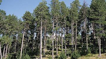 Je suis planté pour régénérer des terrains secs de montagne