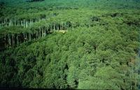 La sève se hisse lentement jusqu'au sommet de l'arbre pour s'enrichir par la photosynthèse