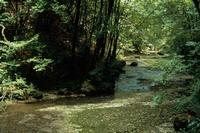 La forêt capte et restitue l'eau lentement
