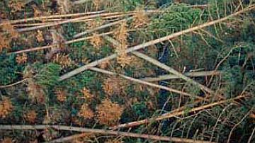 Parfois, même la forêt est mise ventre à terre par la tempête
