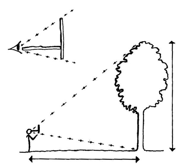 onf calculer la hauteur d 39 un arbre animation. Black Bedroom Furniture Sets. Home Design Ideas