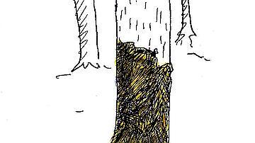Un sanglier a fait sa toilette sur ce tronc maculé de boue