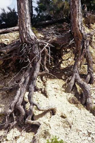 onf - les racines : connaissance