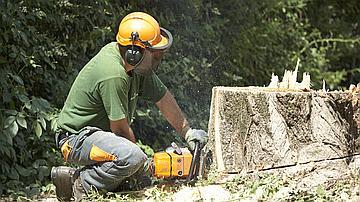 Il n'est pas nécessaire d'avoir une grande lame de coupe pour couper de gros arbres, mais l'affûtage de la chaîne doit avoir été bien fait