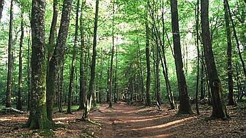 Un chemin forestier guide les pas et laisse le regard vagabonder