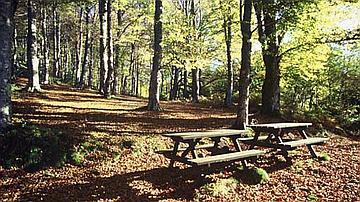 En forêt, grâce aux infrastructures d'accueil, il y a des pique-niques 5 étoiles !