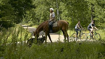 Un bon cavalier est attentif aux réactions de sa monture