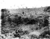 Ancienne photo illustrant les débuts de la resauration des terrains en Montagne (RTM)