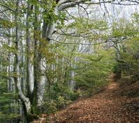 Sentier en forêt de Vizzavona