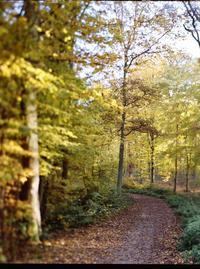 Sentier des 13 ponts en forêt de Meudon