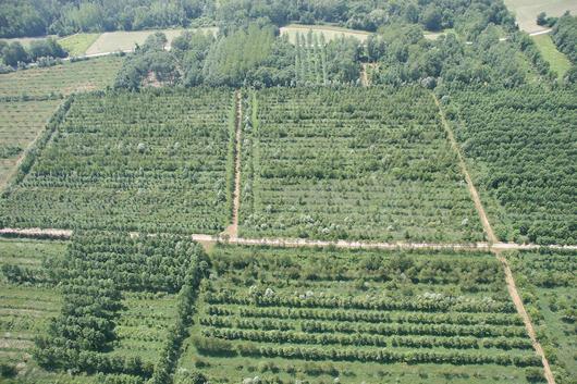 Vue aérienne de la forêt de Chautagne