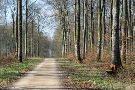 Une allée en forêt domaniale du Corgebin