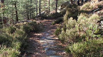 Les chemins étaient aménagés pour l'exploitation des carrières de grès de la forêt