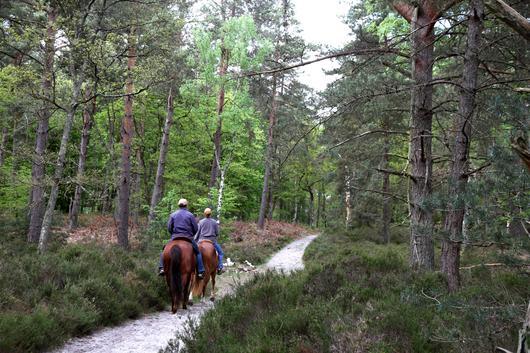 Des cavaliers en forêt