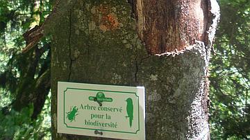 """Un panneau """"Arbre conservé pour la biodiversité"""""""