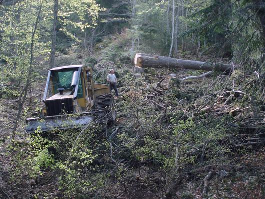 Un engin forestier qui extrait du bois