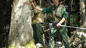 Des forestiers en martelage